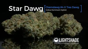 Star Dawg Strain Review