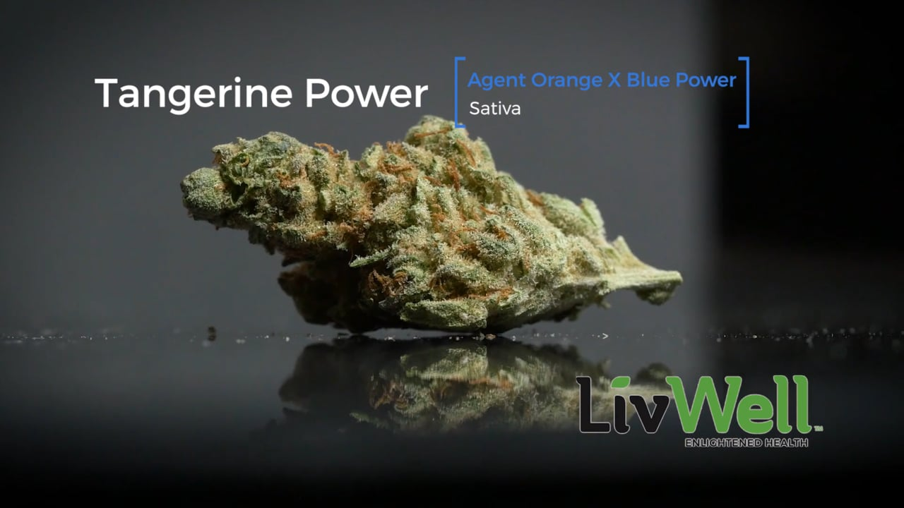 Tangerine Power Strain Review