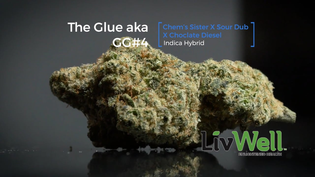 The Glue Cannabis Strain Review Video